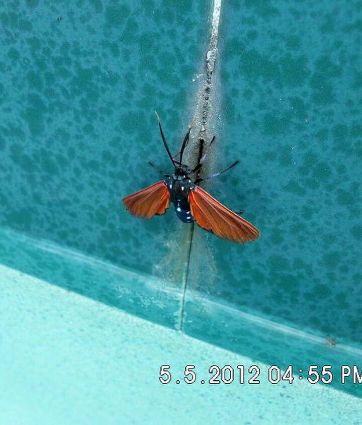 unknown bug, pest control, pool designs