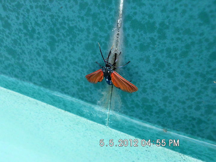 unknown bug, pest control, pool designs