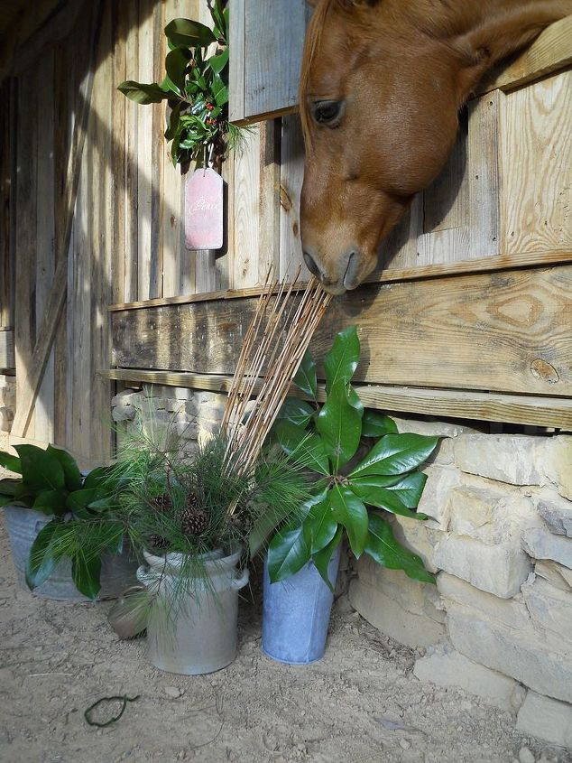 this is a video of the help that doc the horse gave me it is hysterical lol, Doc said What bamboo is a grass I can eat it