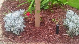 Sprinkler heads above ground?? Is this ok? | Hometalk