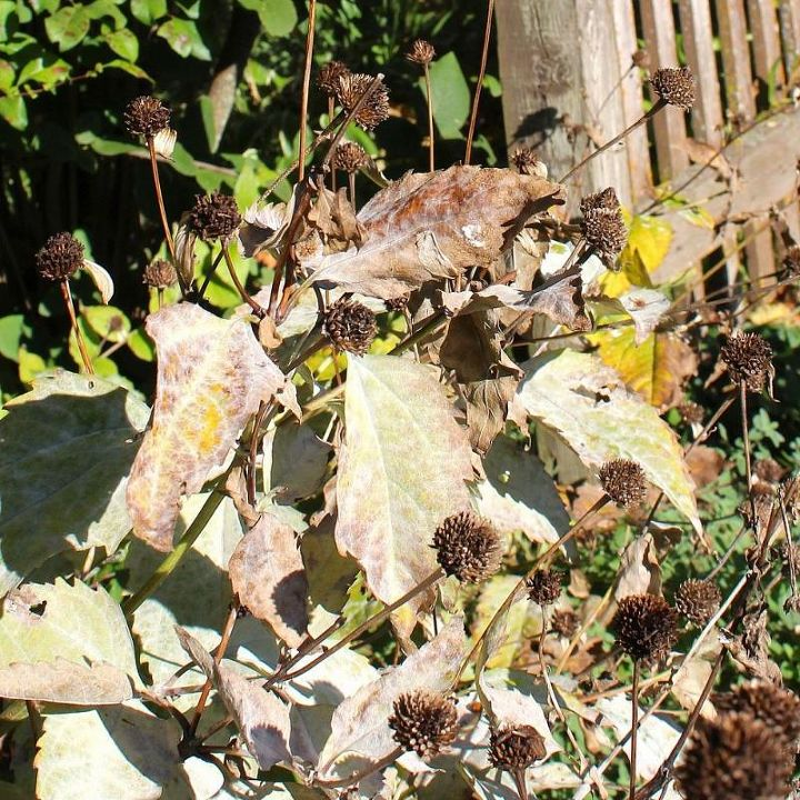 Check your plants for any disease or fungus. Cut any diseased plants to the ground and burn the waste rather than tossing in the compost to prevent spreading the disease.