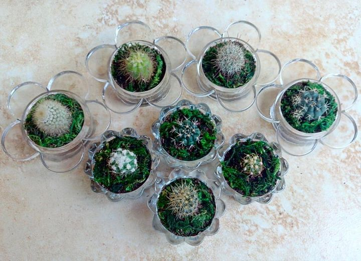 upcycled some of our tea candle holders to cacti containers, container gardening, crafts, gardening, repurposing upcycling