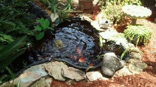 q koi pond care, outdoor living, ponds water features, This is my 2nd koi pond just a few ft from the other