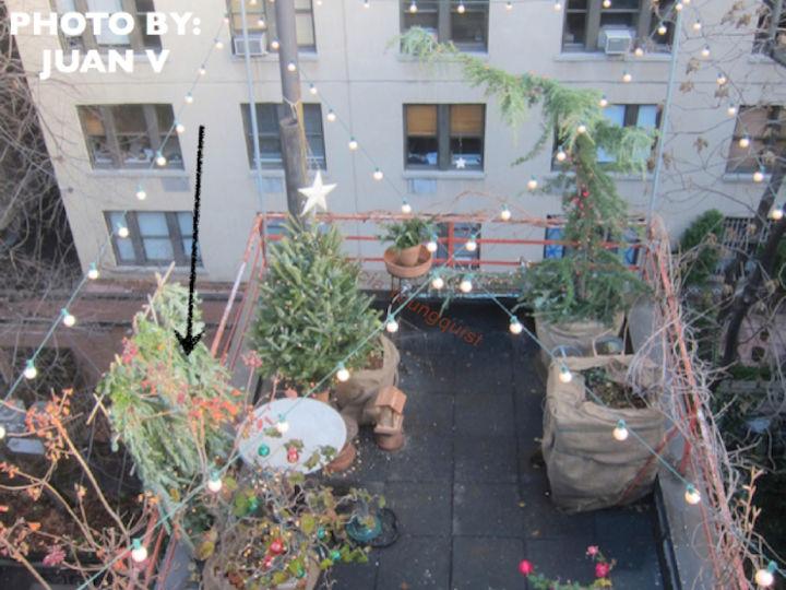 urban garden winterizing, flowers, gardening, succulents, urban living