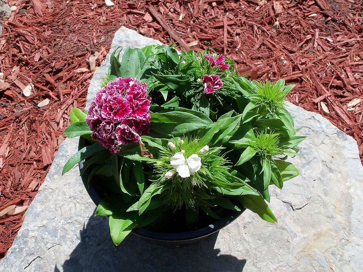 It has 2 different colors of flowers- pink and white and 2 different types of foliage