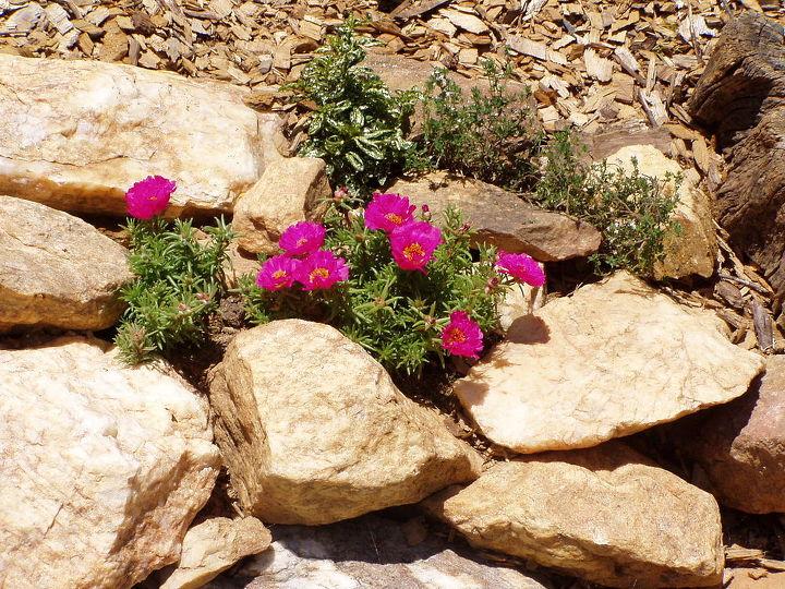 planting my rock garden, gardening