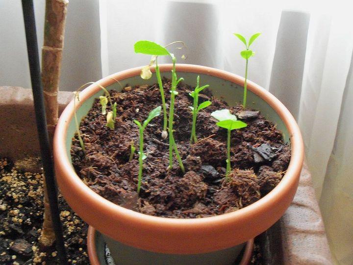 Seedlings still growing! Summer 2013