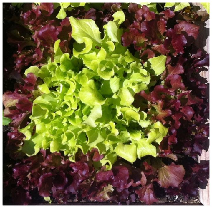Cheap Ways To Do Your Garden: Salad Dressing: 6 Dirt Cheap Ways To Turn Your Garden Into