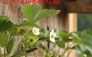 upcycle gutters into a strawberry planter, gardening, repurposing upcycling