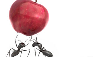 how to avoid ants before spring arrives, pest control
