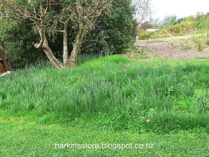 autumn garden, gardening, landscape, outdoor living