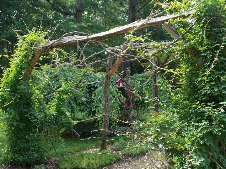 locust arbor, gardening, landscape
