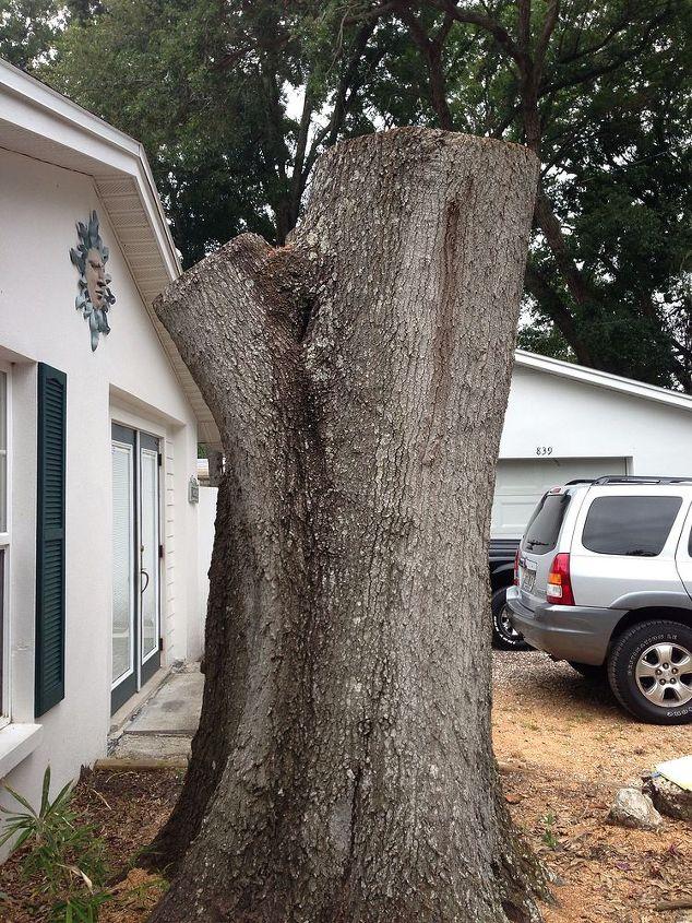 Outdoor Tree Stump Ideas Designs
