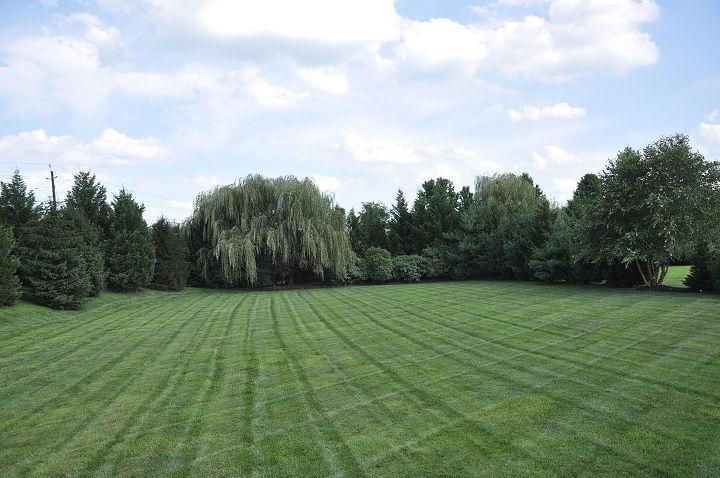 A VERY lush lawn