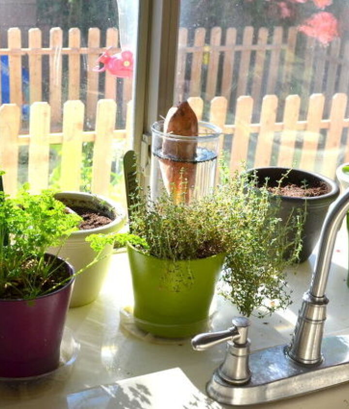 17 plants you grow from kitchen scraps, composting, gardening, go green, homesteading