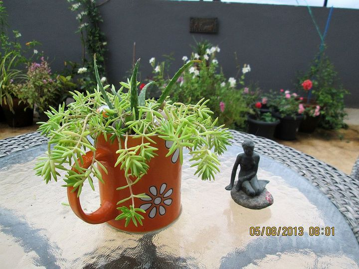 succulents in a cracked mug, flowers, gardening, succulents