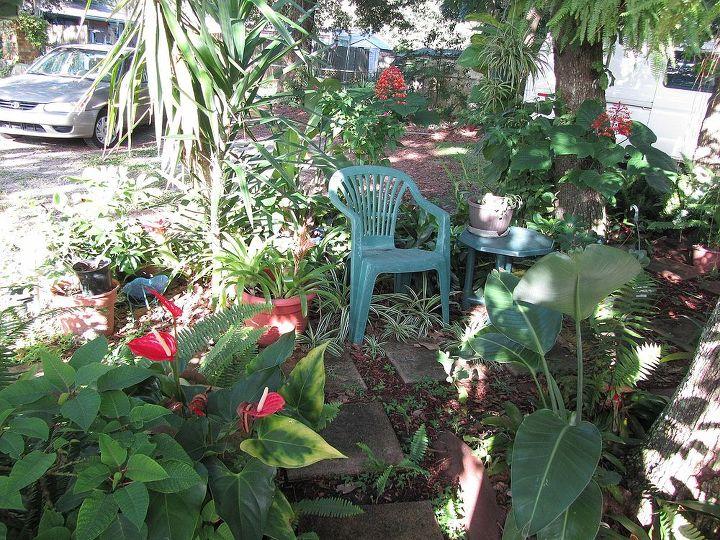 my back yard, gardening