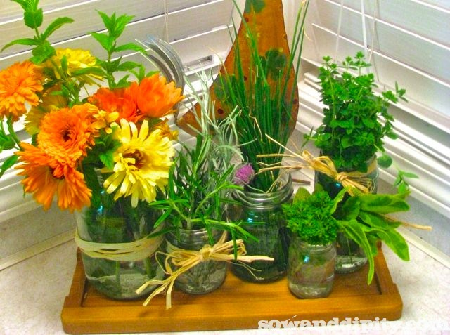 Herb keepers, those blooms are Calendula BTW, edible petals :)