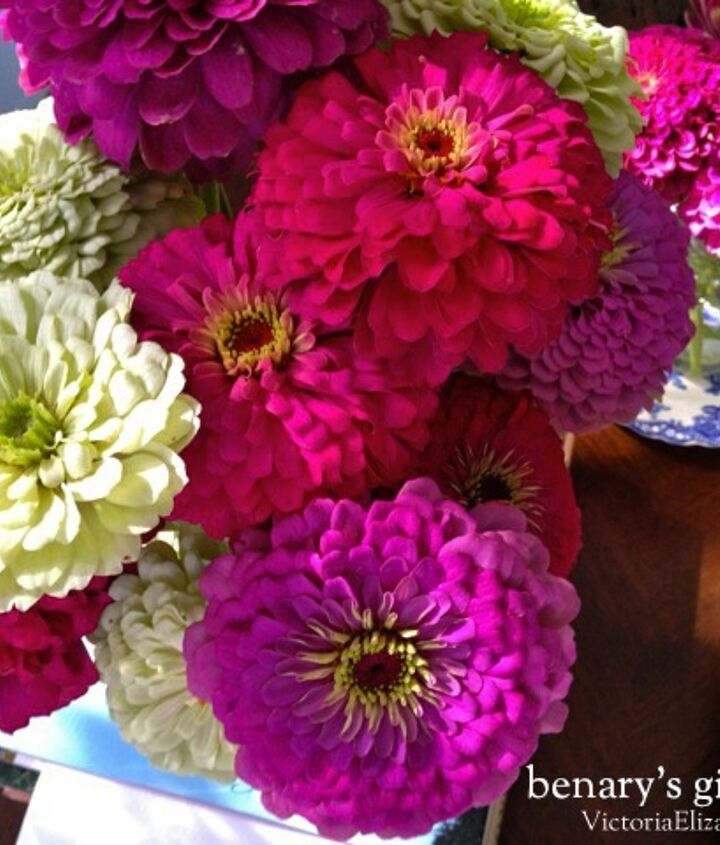 my favorite flower to pinch and root... it's SO easy to start from seed, flowers all summer long... and they make a FANTASTIC cut flower.  http://victoriaelizabethbarnes.com/raised-flowerbed-cutting-garden-benarys-giant-zinnia/