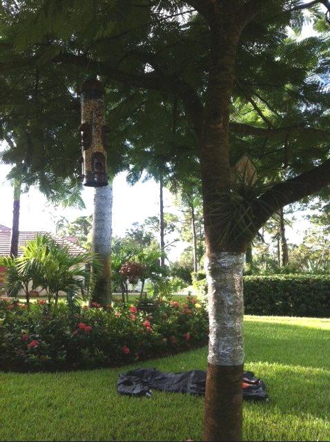 bird feeder deterrent, gardening, wildlife animals