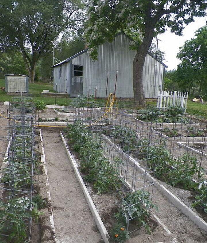 our garden 2012, gardening