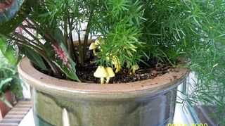 q i ve never seen a yellow mushroom before is it detrimental to my plant or o k to, gardening