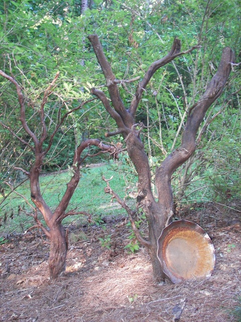 My Root Art, from a fallen tree.