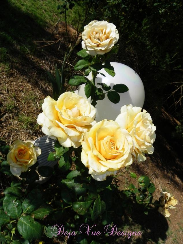 what s blooming in my garden this week, gardening, More on this post
