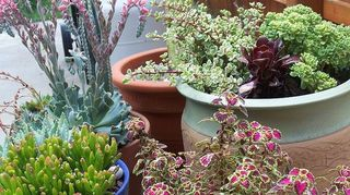 q what s your favorite plant combination calling all plant lovers anyone interested, gardening