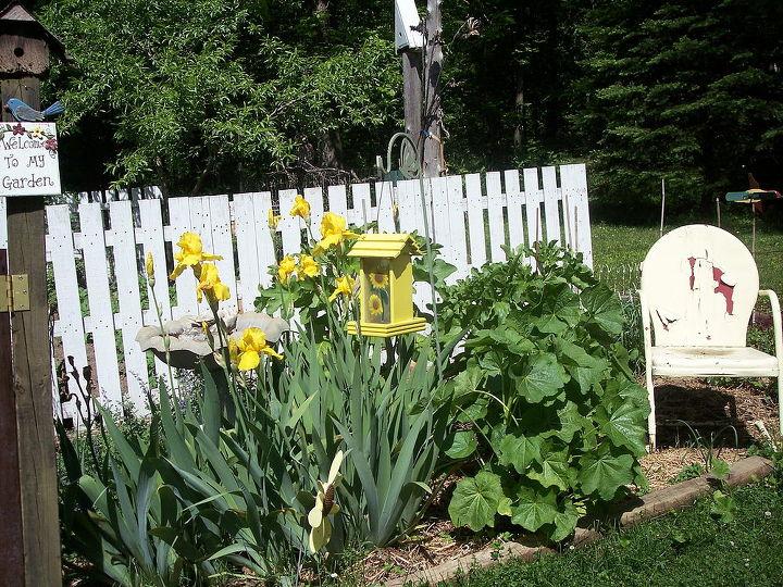 the garden entrance holy hocks yellow iris herb garden, gardening, The herb garden plus yellow iris and hollyhocks