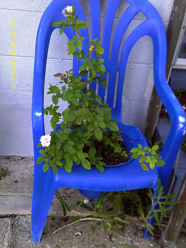 repurposed garden lawn furniture, flowers, gardening, painted furniture, repurposing upcycling, Mini Rose Bush Lawn Chair Planter