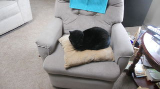 q sheila anyone my desk needs help, painted furniture, ARROGANT AND PRESUMPTUOUS 18 YR OLD CAT IN MY CHAIR AND IN MY PRESENCE no shame or fear
