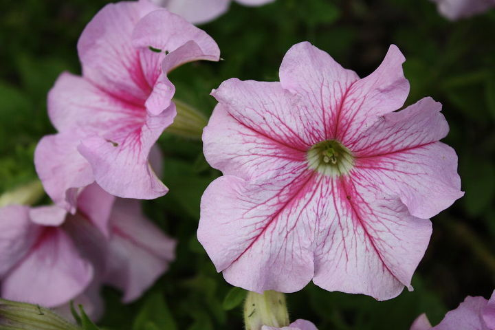 Petunia's....the cheapest of the flowers in Nurserys and actually I find to be the most difficult to grow by seed. But the end results are worth it. Flowers last to fall. Just pinch off faded flowers every couple of days and will promote more growth.