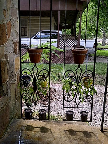 2 Trellises hanging from the West side of front porch, pots wired to the trellis and planted with a mix of Morning Glorys and various vines.