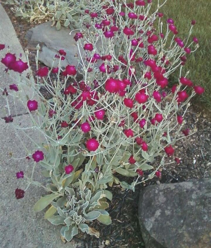 can anyone tell me the name of this plant much appreciated, gardening