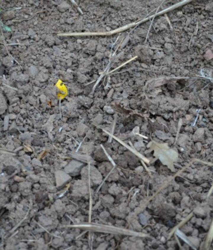 Loosen the dirt