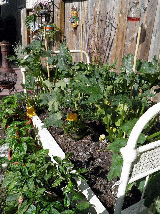 i need to learn how to grow good zuchinni, flowers, gardening, raised garden beds, Zuchinni raised bed planter in full sun
