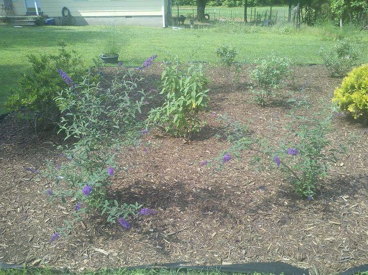 front yard garden, gardening