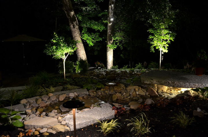 Night view of the sycamores, maple, and viburnum trees.