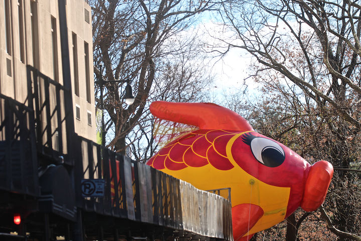 """An unidentified fish """"marches"""" (swims out of water) in Macy's 2013 Thanksgiving Parade. View One (at CPW),"""