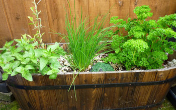 getting started with container gardening, container gardening, gardening
