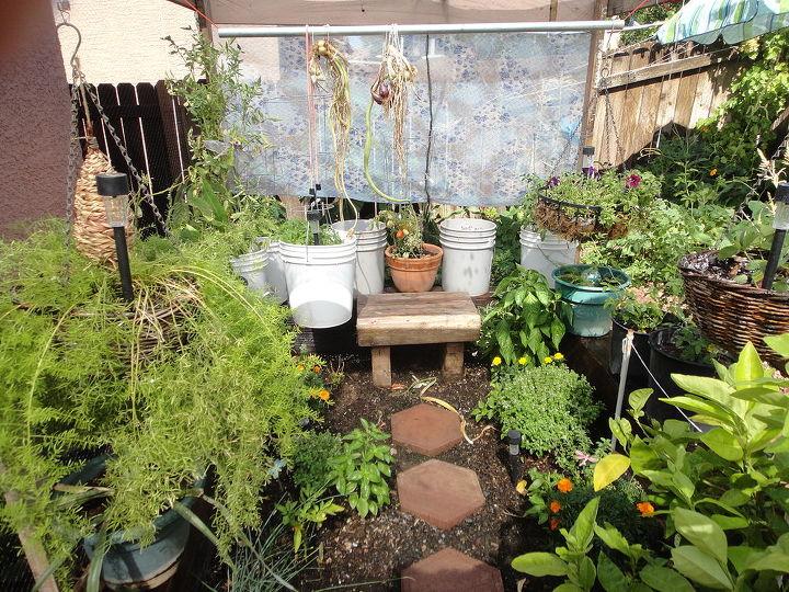 this is the amazing desert garden, gardening