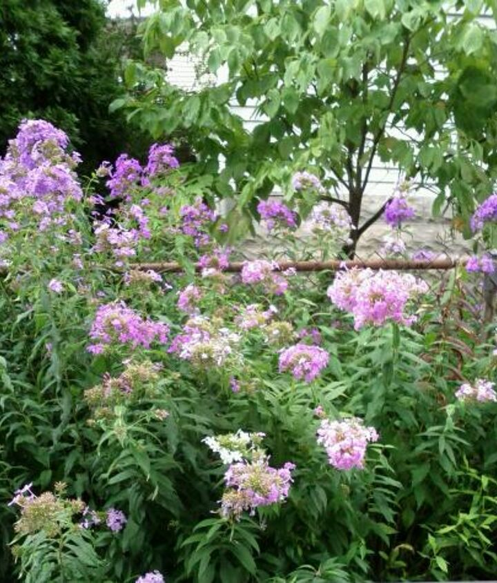unidentified flower, flowers, gardening