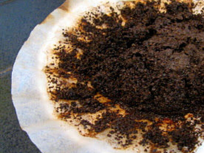 use your old coffee grounds in the garden, gardening, homesteading