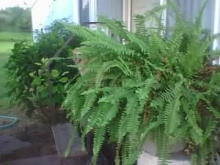This is just one of my old plants that I lost when I moved up North, lookind to replace it soon!