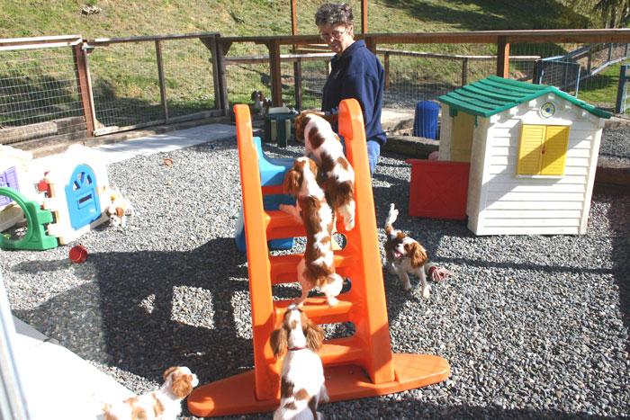 an outdoor play area of any size will keep him entertained