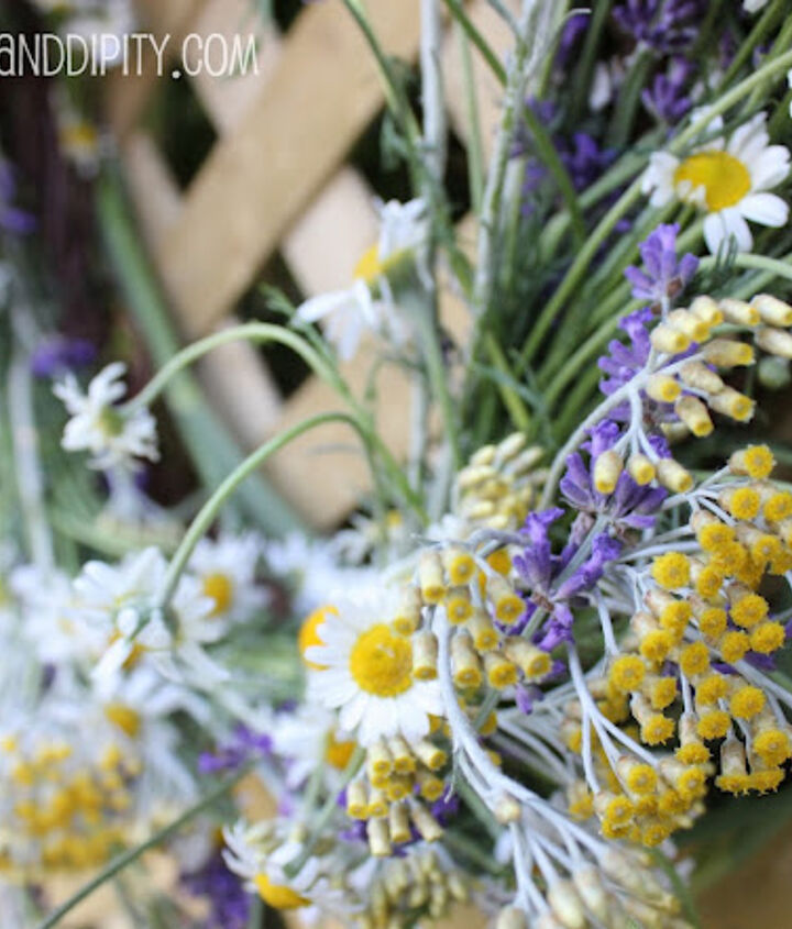 Chamomile, Helichrysum and Lavender