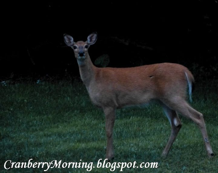 q deer birds and patio doors to grid or not to grid, doors, pets animals, At night in our backyard
