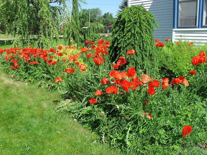more garden pictures, gardening, outdoor living