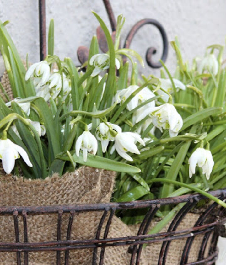 Using a piece of scrap fabric, I lined this planter and stuffed it with snowdrops.